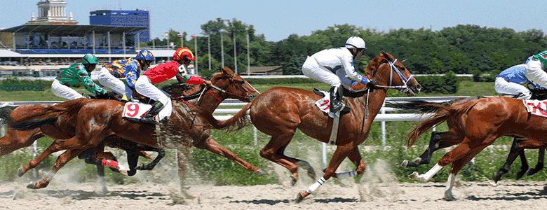 Pferdewetten Rennen